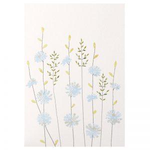 Chicory & Grass