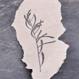 Eukalyptus lll