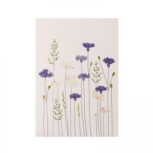 Cornflowers & Daisies