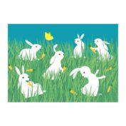 Weisse Kaninchen